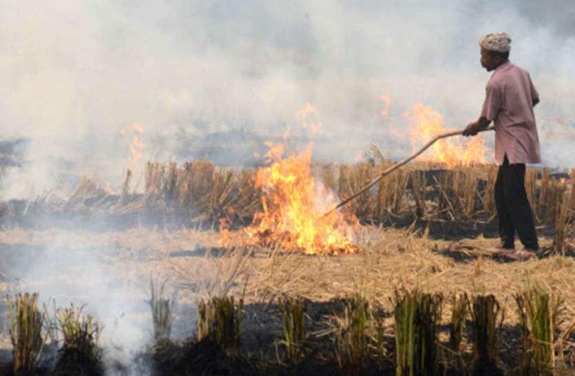 Punjab: जालंधर के किसानों ने जलाई पराली, कहा-उनके पास कोई विकल्प नहीं