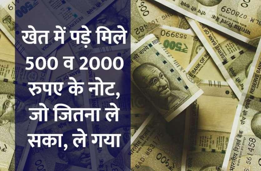खेत में पड़े मिले 500 और 2000 रुपए के नोट, जिसे जितना चाहिए था, ले गया