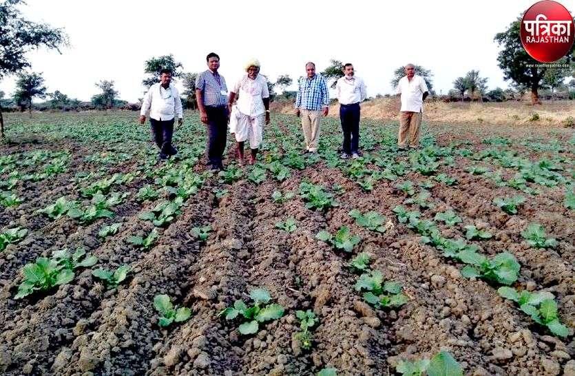 रबी फसल बुवाई में आई तेजी, खेतों में पसीना बहा रहे किसान