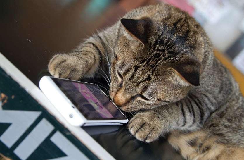 अब बिल्ली की म्याऊं भी समझ सकेंगे हम, अमेजन के पूर्व इंजीनियर ने बनाया 'कैट ट्रांसलेटर