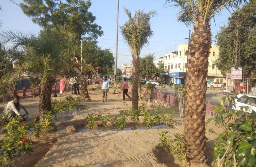 जोधपुर शहर के भाटी सर्किल से गुजरेंगे तो अब दिखेंगे खजूर के पेड़