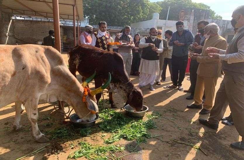 गायों को लापसी खिला, पूजा कर मनाया गोपाष्टमी पर्व