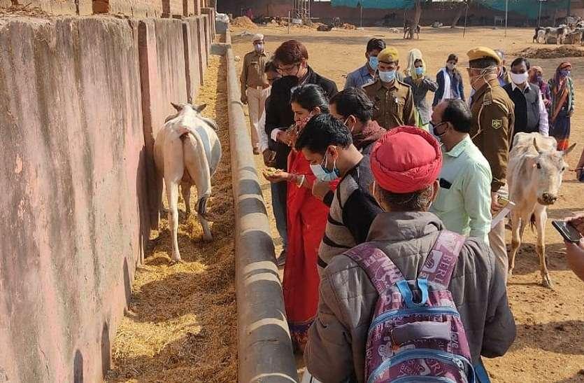दोनों महापौर पहुंचीं हिंगौनिया गौशाला, गायों की दुर्दशा देख जताई नाराजगी