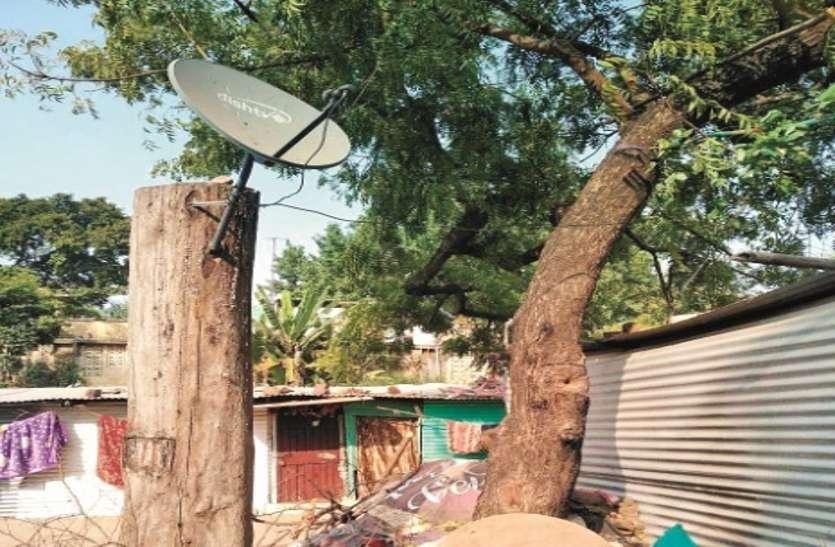 पेड़ काटने से शहर में घट रही हरियाली, बच रहे सिर्फ ठूंठ