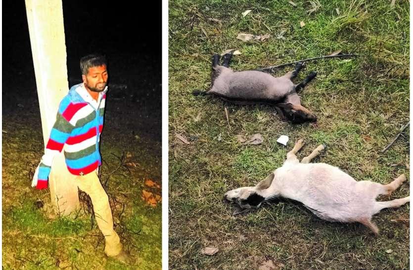 आधी रात चोरी कर ले जा रहा था 2 बकरा, मालिक को बेदम पीटा और बकरों की कर दी हत्या, ग्रामीणों ने पकडक़र खंभे से बांधा