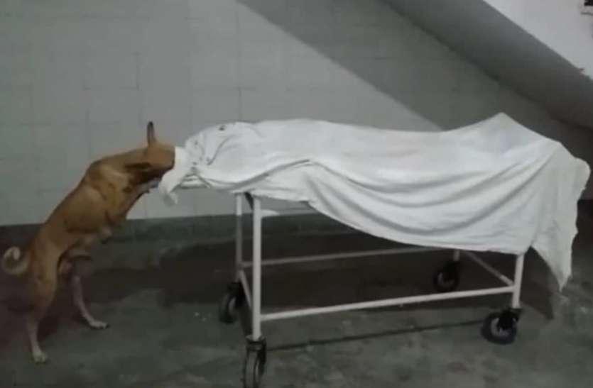 Shocking: हॉस्पिटल में लड़की के शव को नोचकर कुत्तों ने खाया, सीएमओ ने दिए जांंच के आदेश