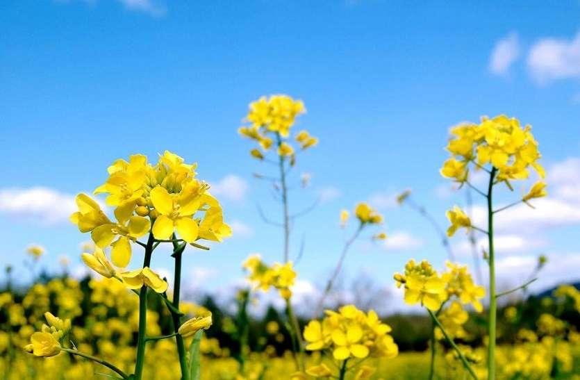 दलहन और तिलहन फसलों में किसानों की दिलचस्पी
