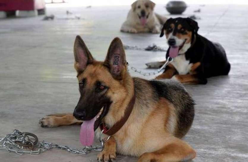 गजब! अब आर्मी के खोजी कुत्ते सूंघकर बताएंगे इंसान में कोरोना है या नहीं