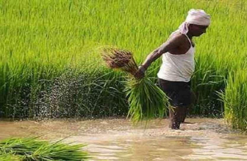 हाईटेक हुए किसान, अब ऐप से धान खरीदी का पंजीयन