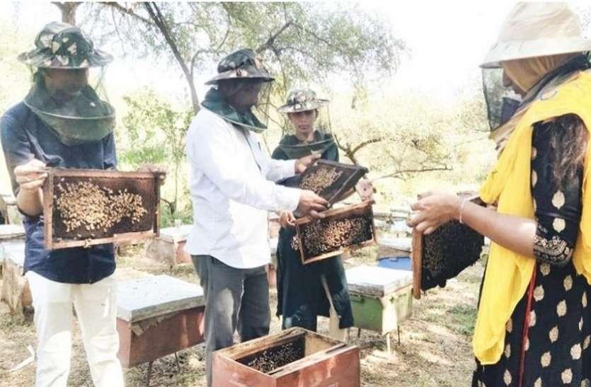Ahmedabad News : मधुमक्खी पालन को प्रकाश ने बनाया आय का नयाजरिया