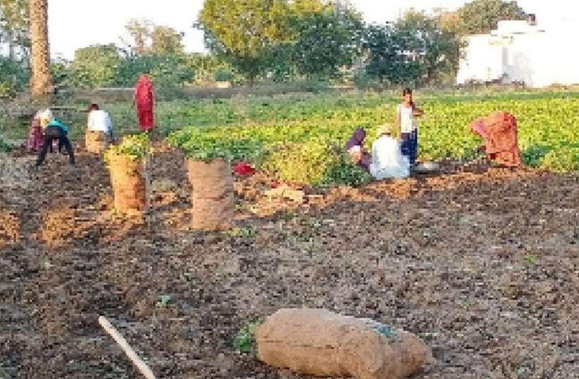 उपज को खेत से निकालने में जुट रहे किसान