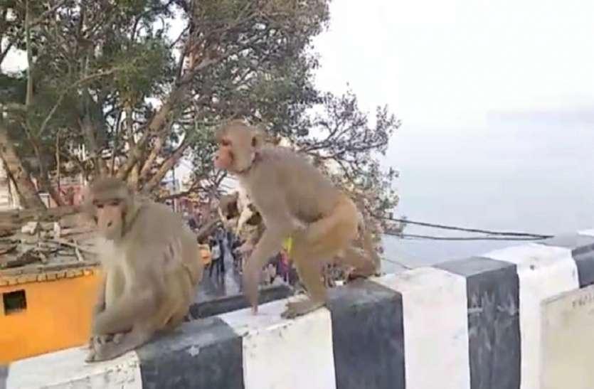 अनोखा : बंदर ने कुत्ते को बच्चे को उठाया गोद फिर.....
