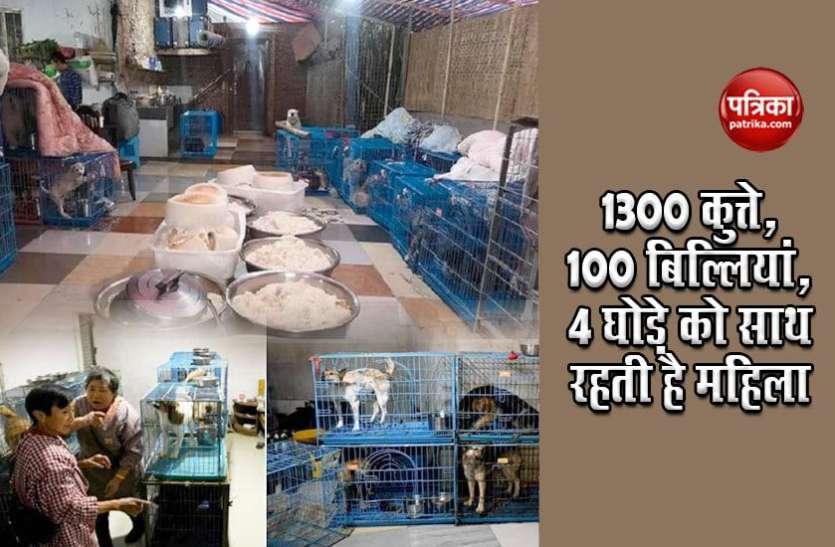 1300 कुत्ते, 100 बिल्लियां, 4 घोड़े को पाल रही हैं ये महिला, रोज पकाती है 500 किलो चावल, सब्ज्यिां, मीट