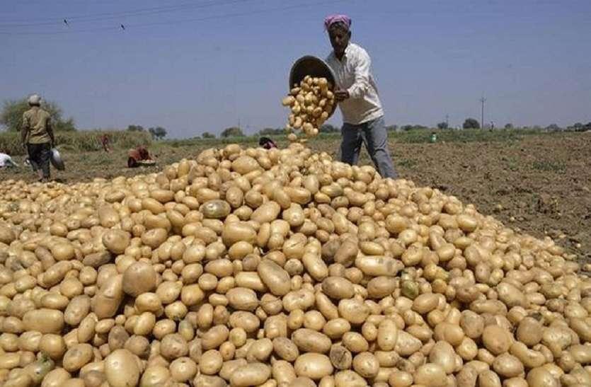 Potato: आलू के थोक भाव एक महीने में 81 फीसदी टूटे