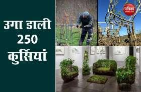 ब्रिटिश कपल ने खेत में उगाई मेज-कुर्सियां, फर्नीचर की तस्वीरें देख सभी हैरान