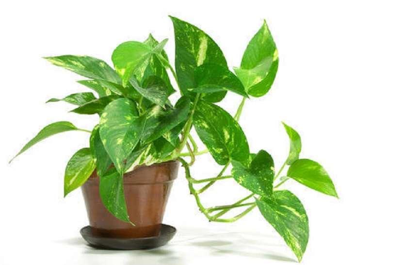 प्रदूषण कम करने लिए घर में लगाएं ये 5 पौधे