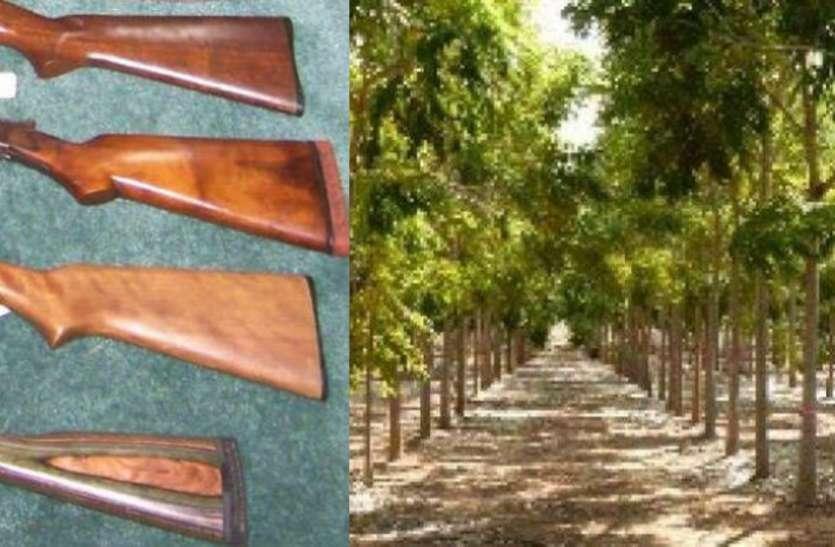 लोइंग का किसान कर रहा बंदूक के बट की खेती, दूर-दूर से आते हैं खरीदार