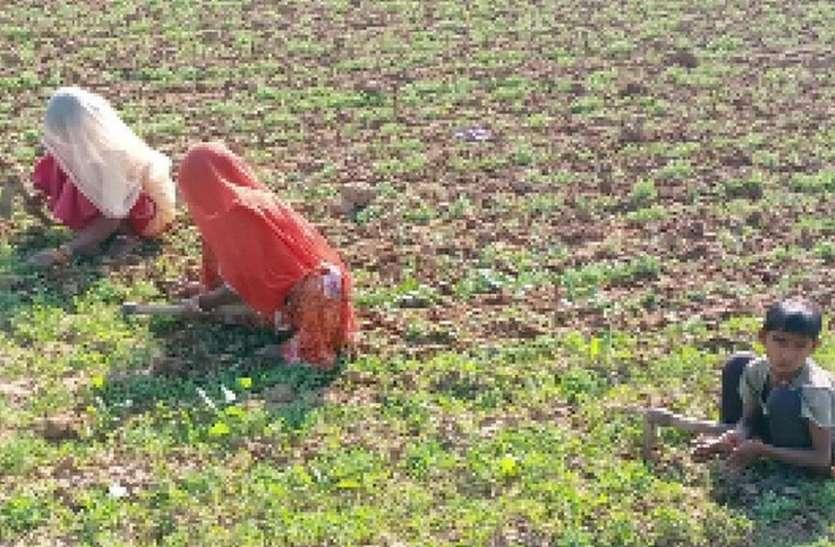 खेतों से खरपतवार निकालने में जुटे किसान