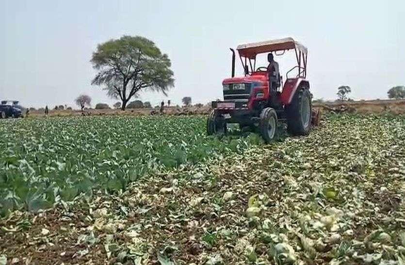 श्रीदेव रघुनाथ ट्रस्ट कृषि भूमि की होगी खुली ठेका नीलामी,एसडीएम कोर्ट ने सुनाया फैसला