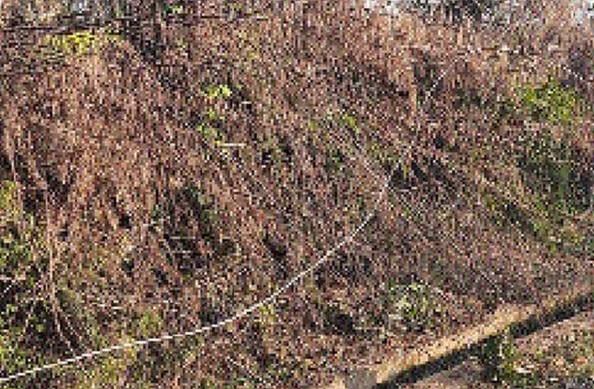 11 केवी विद्युत लाइन का तार टूटा, दो जने बाल-बाल बचे