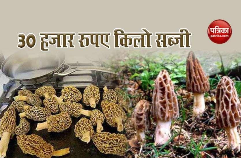 इस सब्जी में है गुणों का खजाना, कीमत 30,000 रुपए किलो, विदेशों में भारी डिमांड