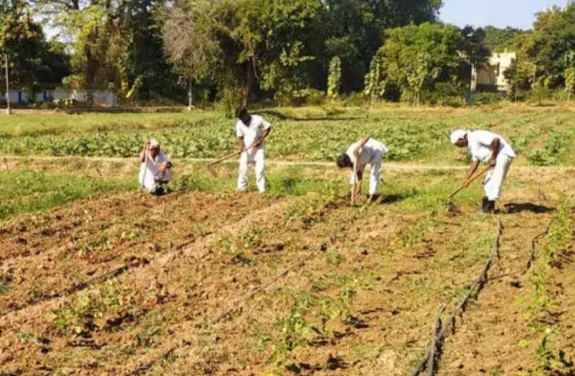 वडोदरा सेंट्रल जेल में 20 कैदी बने किसान