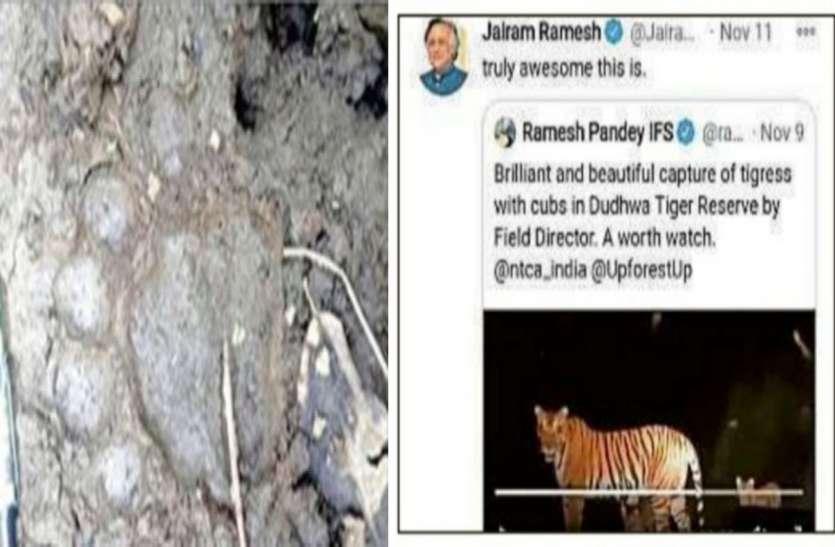 बाघ के पंजे के निशान मिले, ग्रामीणों में डर का माहौल