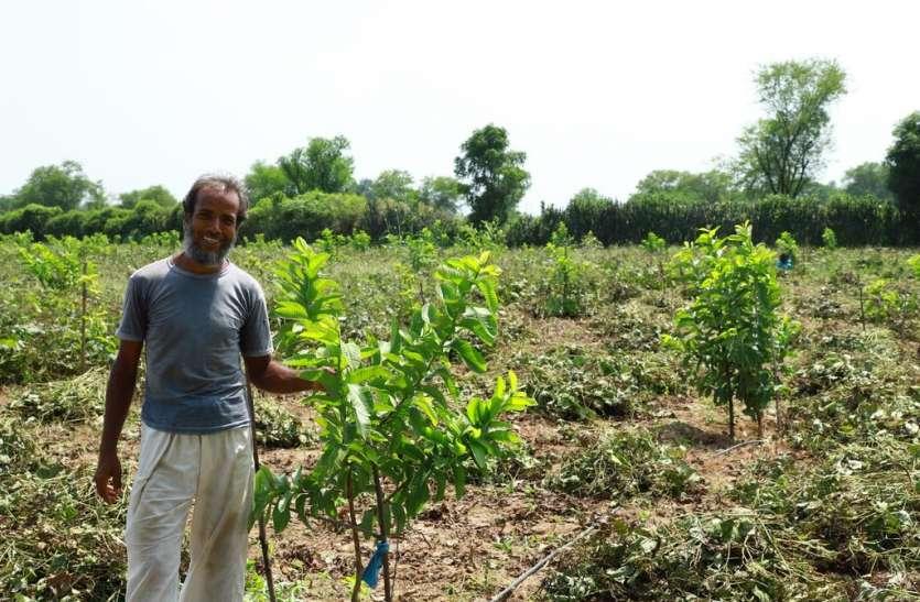 किसान उगा रहें हैं हाईवेल्यू फल और सब्जियां