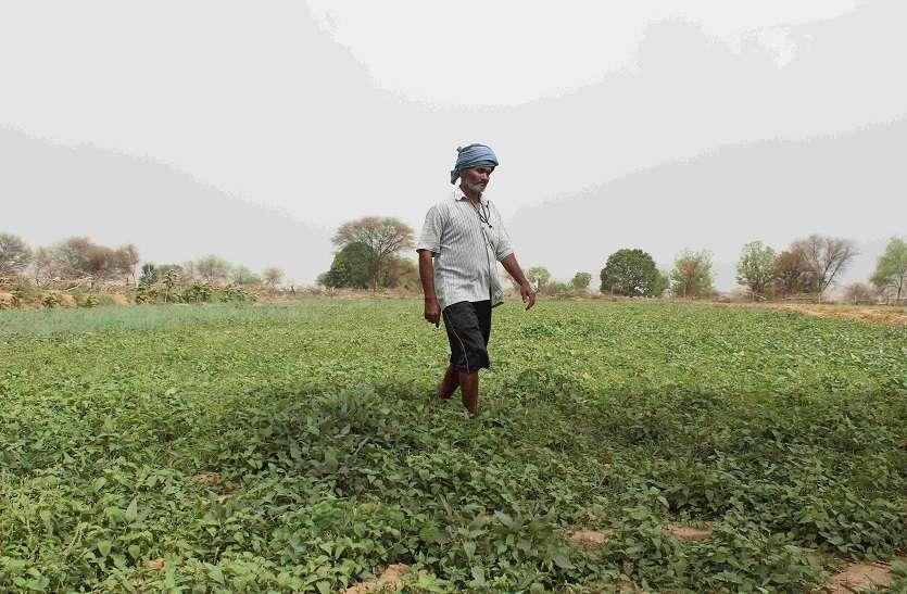 रबी फसलों की बुवाई 598 लाख हेक्टेयर में
