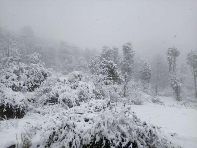 snowf.jpeg