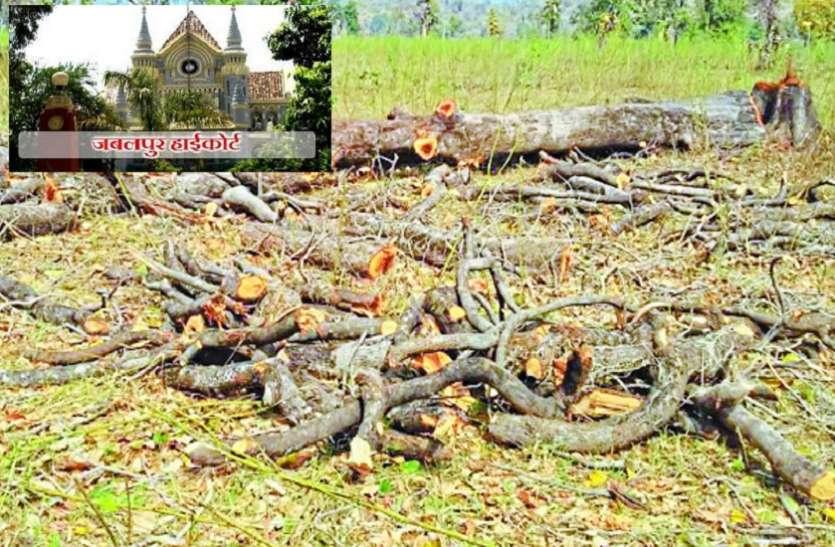 300 साल पुराने पेड़ काटकर जंगल को बना दिया मैदान