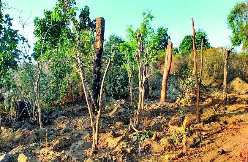 850 पेड़ों की शिफ्टिंग शुरू, लगाने थे 20 फीट दूर, 2-5 फीट पर ही लगा रहे