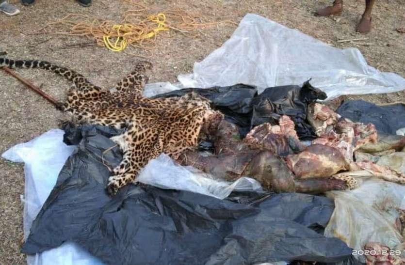 फंदा लगाकर तेंदुआ का शिकार, आधी रात निकाल रहे थे खाल