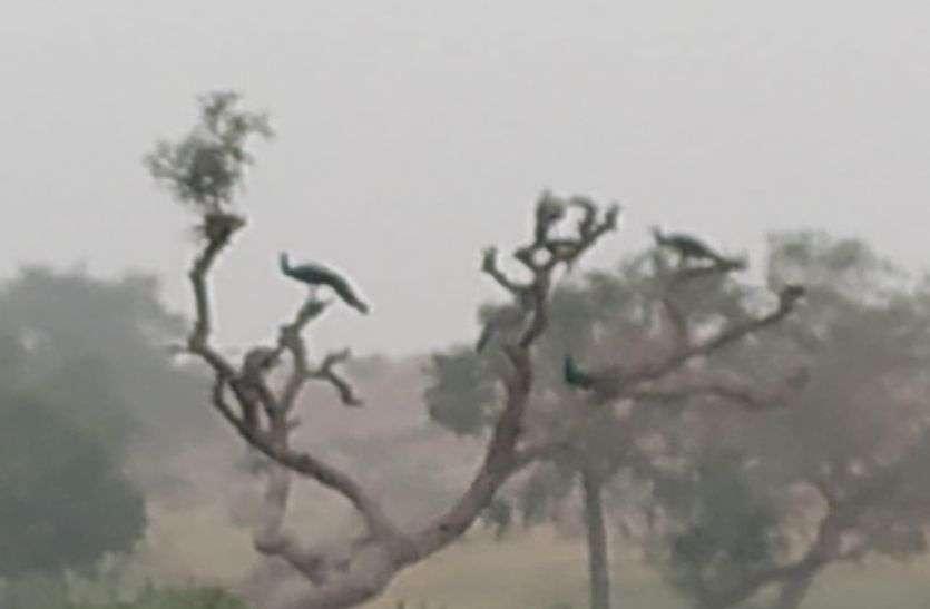 बाड़मेर में भारी कोहरे की चेतावनी, चार दिन रहेगा असर