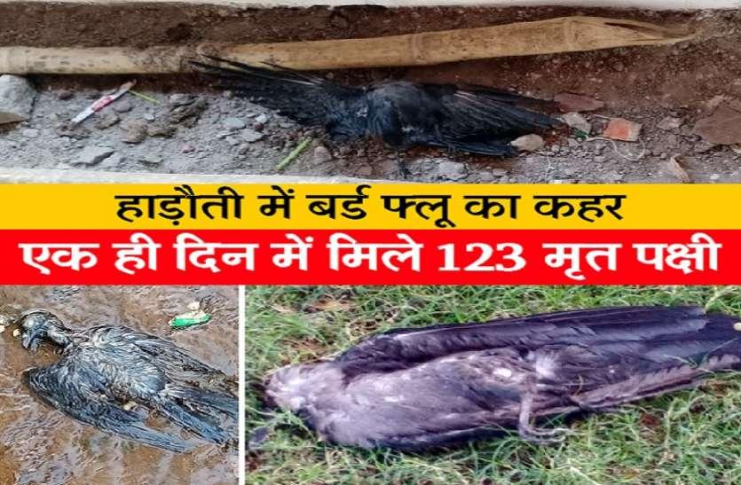 बर्ड फ्लू का कहर: एक ही दिन में मिले 123 मृत पक्षी