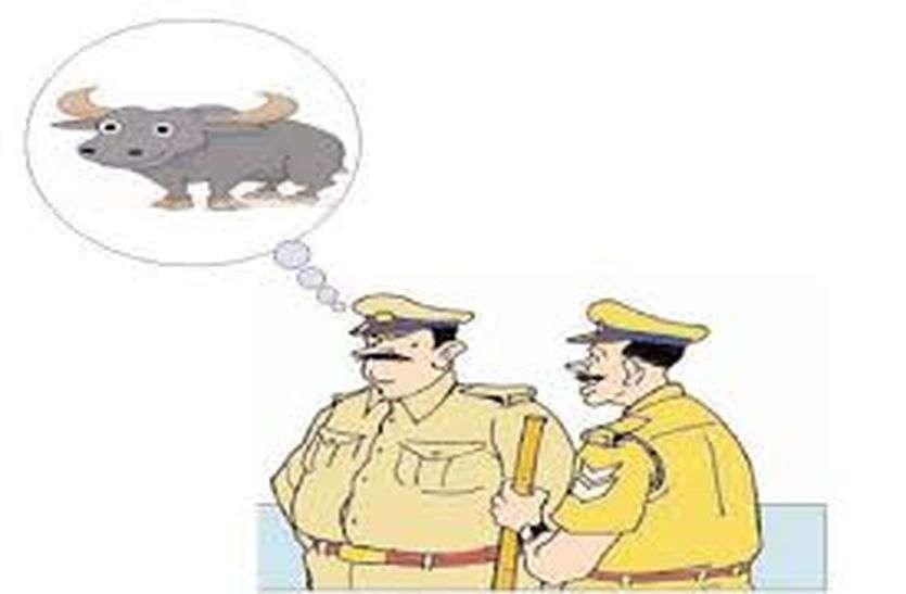 कबूतर के बाद अब भैंस बनी पुलिस की परेशानी