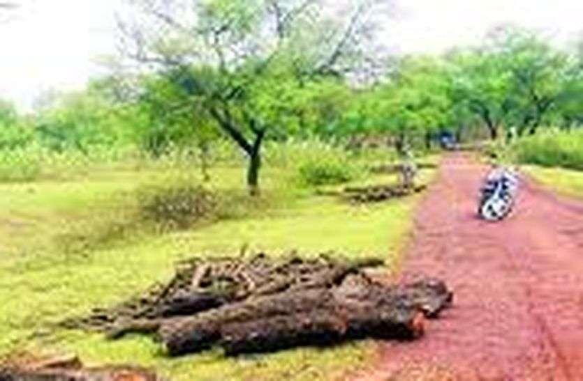 Tree Felling - वृक्षों की कटाई के खिलाफ अनिश्चितकालिन धरना प्रदर्शन