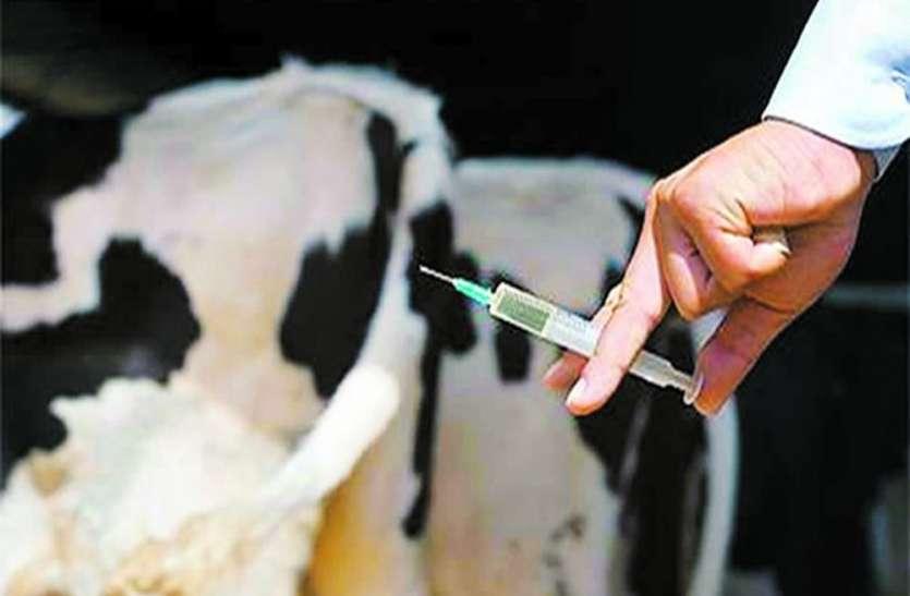 पशु टीकाकरण अभियान को प्रभावी ढंग से संचालित करने के निर्देश
