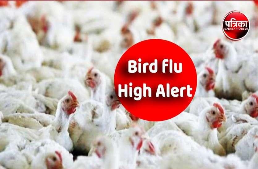 बर्ड फ्लू: नौ जिलों में वायरस की पुष्टि, सावधानी एवं सतर्कता बरतने के निर्देश