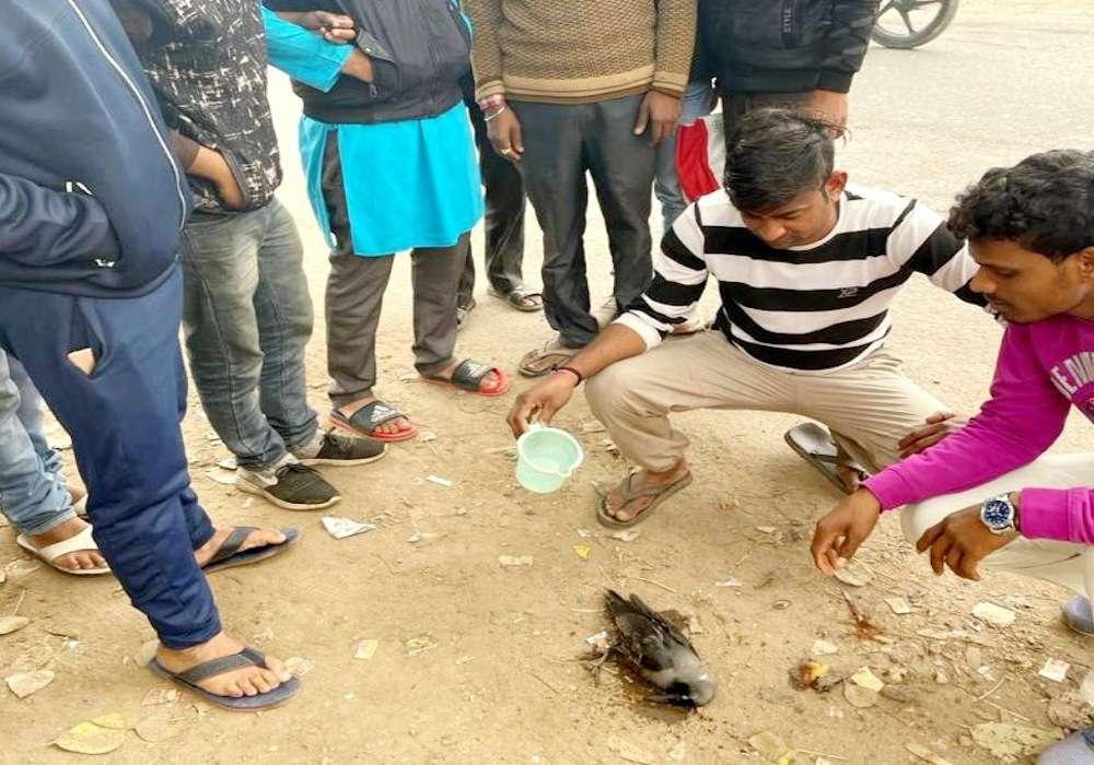 पूर्वांचल में पक्षियों की मौत बनी संदेह, अचानक हुई कौवों की मौत से स्वास्थ्य महकमा अलर्ट, बर्ड फ्लू का भय