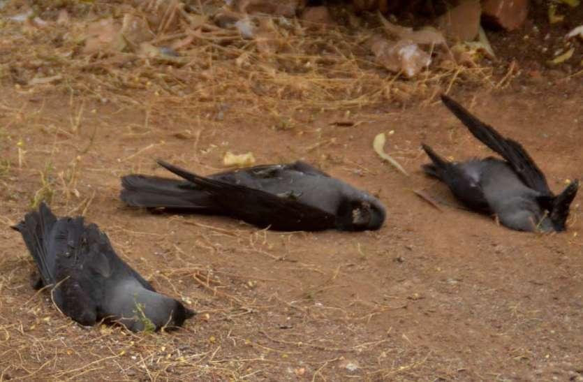 Wardflu: जिले में संक्रमण से 72 कौओं की मौत के बाद अब सतर्क हुआ प्रशासन और पशुपालन विभाग