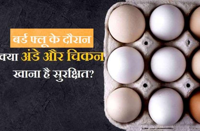 डॉक्टर और पक्षी विशेषज्ञ बोले- अफवाहों से घबराएं नहीं, खूब खाएं चिकन और अंडे