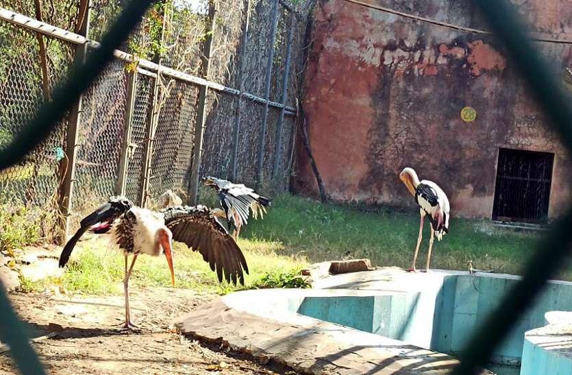 जयपुर चिडियाघर बंद, बर्ड फ्लू के चलते उठाया कदम, चार पक्षी मृत मिले, तीन बीमार