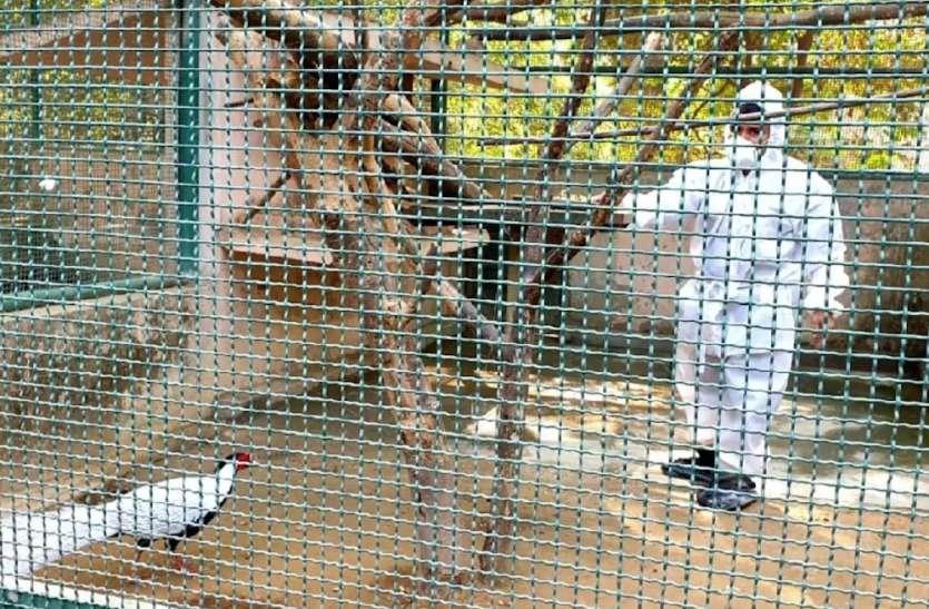 बर्ड फ्लू के खतरे को देखते हुए लखनऊ का चिड़ियाघर हुआ बंद, पीपीई किट पहनकर काम कर रहे कर्मचारी