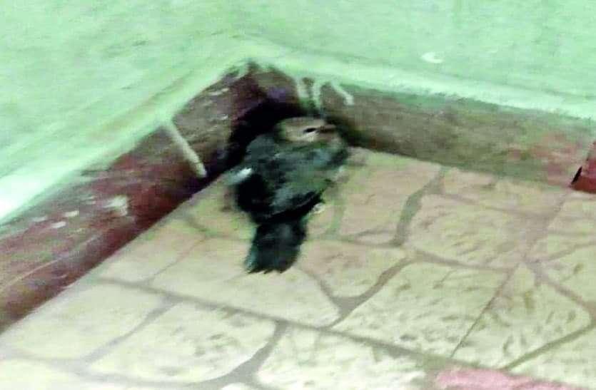 मंत्री-आइएएस के बंगले, कोलार रोड और शाहजहांनाबाद में कई पक्षियों की मौत