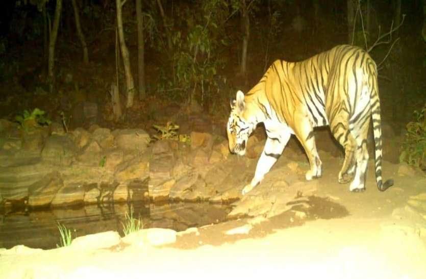 जंगल में शिकार रोकने बनाएंगे चारागाह, बाघ की मुश्किल होगी आसान