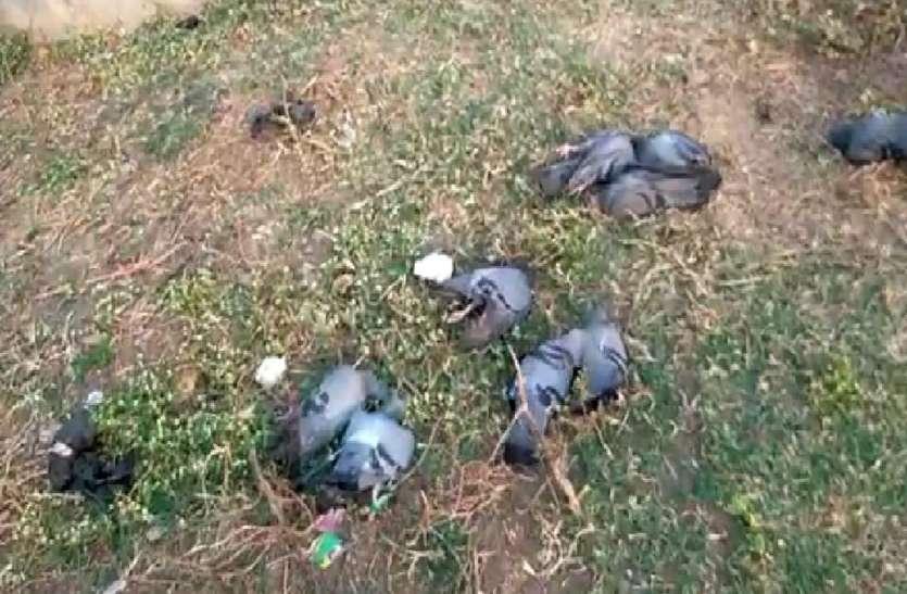 पक्षियों की मौत न हुई, चंद्रकांता जैसी कहानी हो गई !