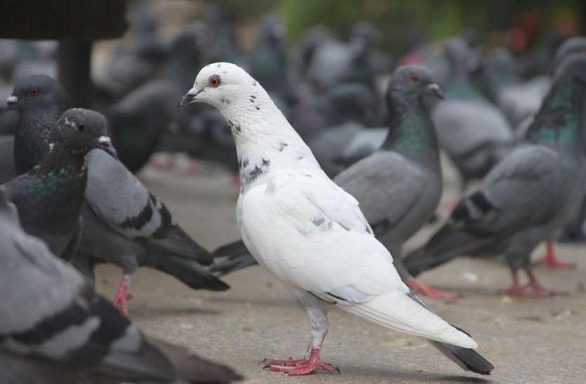 अब तक 21 पक्षियों की हुई मौत