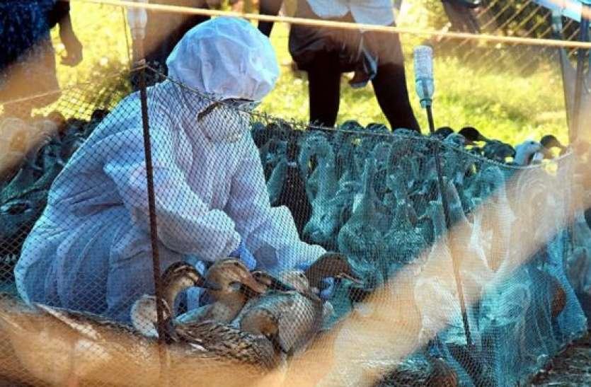 अब जंगलों में फैला Bird Flu, कई प्रजातियों पर मंडराया खतरा
