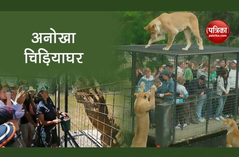 दुनिया का सबसे खतरनाक चिड़ियाघर, इंसानों के ऊपर चढ़ जाते है शेर